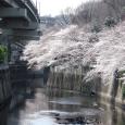 Sakura2017_059