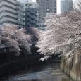 Sakura2017_065