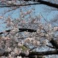 Sakura2017_069