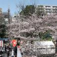 Sakura2017_068