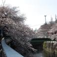 Sakura2017_070
