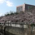 Sakura2017_071