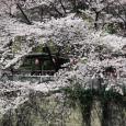 Sakura2017_072