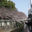 Sakura2017_073