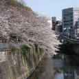 Sakura2017_081