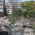 Sakura2017_075