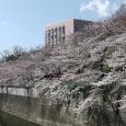 Sakura2017_078