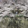 Sakura2017_079