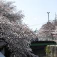Sakura2017_080