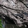 Sakura2017_083