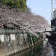Sakura2017_076