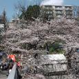 Sakura2017_082