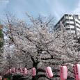 Sakura2017_101