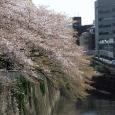 Sakura2017_131