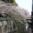 Sakura2017_123