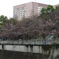Sakura2018_014