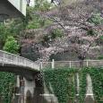 Sakura2018_008