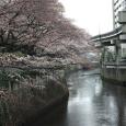 Sakura2018_010