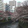 Sakura2018_011