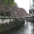 Sakura2018_012