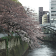 Sakura2018_017