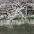 Sakura2018_013