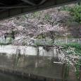 Sakura2018_009