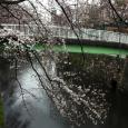 Sakura2018_015