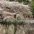 Sakura2018_054