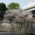 Sakura2018_048