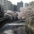 Sakura2018_052
