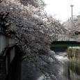 Sakura2018_056