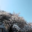 Sakura2018_067