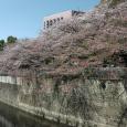 Sakura2018_064