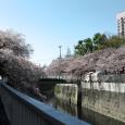 Sakura2018_065