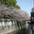 Sakura2018_062