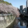 Sakura2018_068