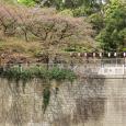 Sakura2018_073