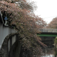 Sakura2018_075