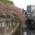 Sakura2018_076