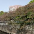 Sakura2018_081
