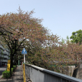 Sakura2018_083