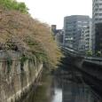 Sakura2018_086