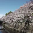 Sakura2019_040