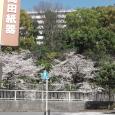 Sakura2019_030