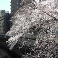 Sakura2019_032