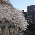 Sakura2019_033