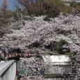 Sakura2019_034