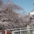 Sakura2019_035