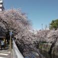 Sakura2019_038